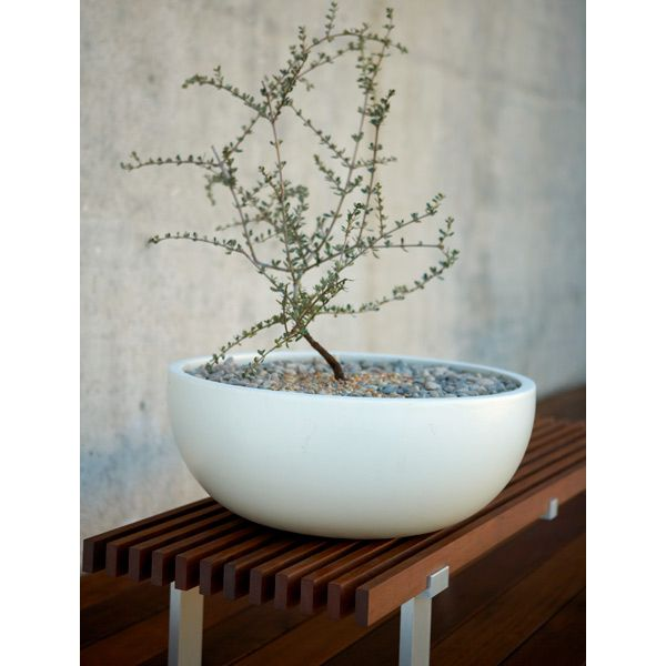 CS PLANTER BOWL 9 WHITE / LARGE PLINTH